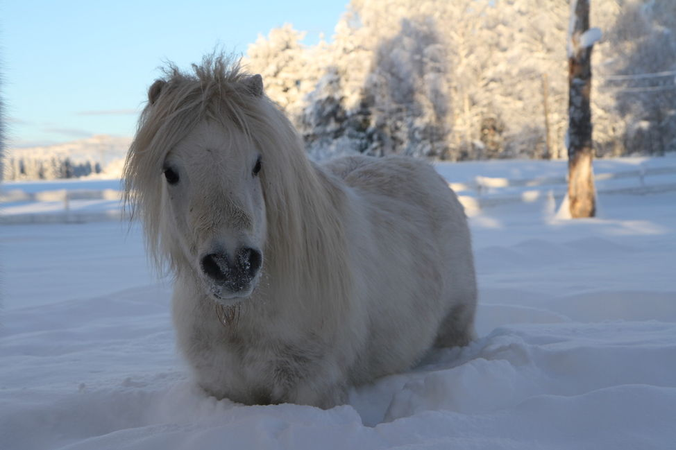 white pony snow cute