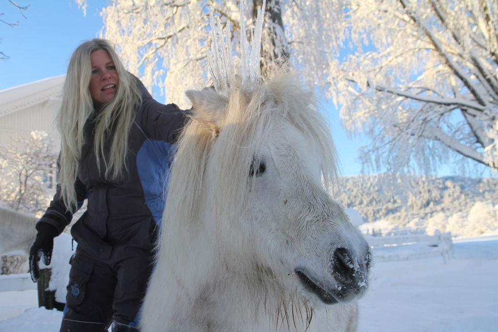 ice crown pony snow